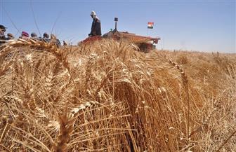 """""""زراعة بورسعيد"""": بدء تسليم 650 طنا فى أول أيام توريد محصول القمح"""