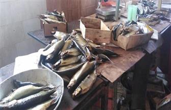 الزراعة: الأسماك متوفرة بالأسواق وأسعار البلطي تنخفض| فيديو