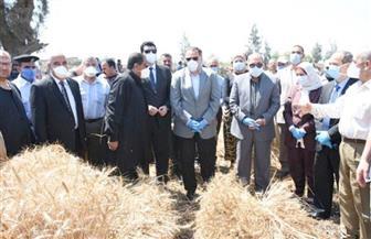 محافظ الشرقية يشهد الاحتفال بيوم حصاد القمح في أبو كبير | صور