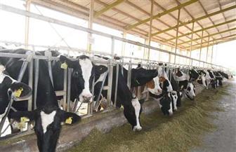 «الزراعة»: 7 نصائح لمنتجي ومربي الثروة الحيوانية والداجنة لمجابهة الظروف الجوية