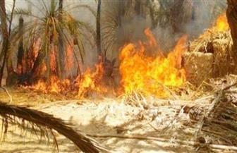 السيطرة على حريق نشب داخل زراعات النخيل بقرية توشكى في أسوان