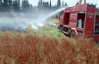 السيطرة على 5 حرائق بأراضٍ مزروعة بمحصول القمح في سوهاج