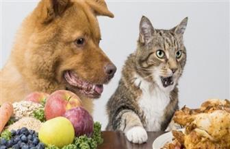 لعشاق القطط والكلاب.. تصويم حيواناتكم الأليفة يقوي مناعتهم