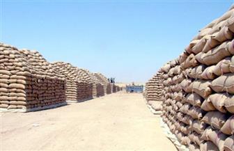 محافظ الشرقية: توريد القمح للصوامع يتضاعف هذا العام