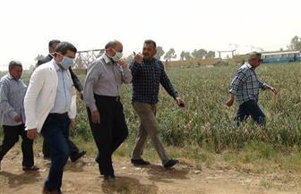 """رئيس جامعة المنيا يتفقد حصاد محصولي القمح والفول بـ""""شوشة"""""""