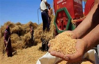 تموين سوهاج: توريد 28 ألف طن من محصول القمح