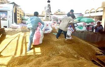 محافظ بورسعيد: انتظام توريد القمح لصوامع المحافظة بإجمالي ١٦٠٦ أطنان | صور
