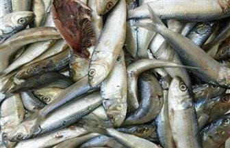 ضبط 3 أطنان سمك مملح فاسد فى البحيرة