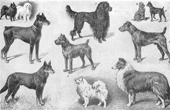 بين الحيوانات والأوبئة.. لماذا رفض المصريون قتل الكلاب في أزمنة الطاعون والكوليرا؟ | صور
