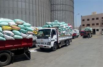 توريد 200 ألف طن من القمح للصوامع والشون بمراكز المنيا
