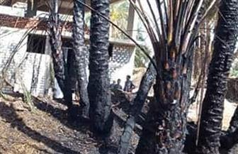 حريق هائل في أشجار النخيل بقرية كومير جنوب الأقصر | صور