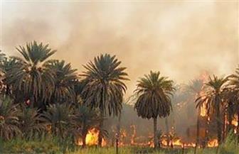 السيطرة على حريق بمزرعة موالح ونخيل بسوهاج