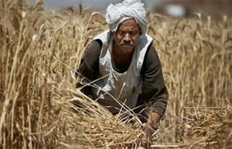 الغضبان: ارتفاع معدلات توريد القمح لمطاحن وصوامع بورسعيد إلى 3600 طن