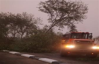 الأجهزة المحلية بالأقصر ترفع الأشجار والنخيل المتساقط بالطرق | صور