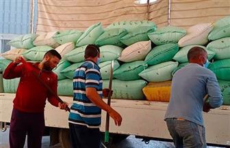 ارتفاع كميات توريد القمح إلى 152 ألف طن بشون كفر الشيخ| صور