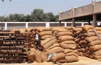توريد 74 ألف طن من محصول القمح بصوامع وشون سوهاج