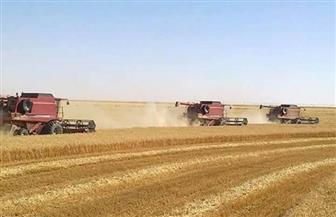 ١٨٨ ألف طن حصيلة توريد القمح بالوادي الجديد