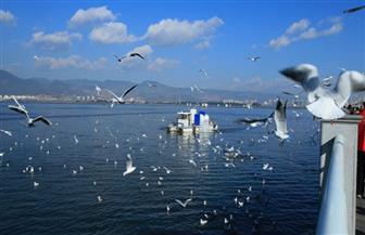 عودة الحياة الطبيعية إلى بحيرة ديانتشي.. جهود الصين لتحسين البيئة الإيكولوجية