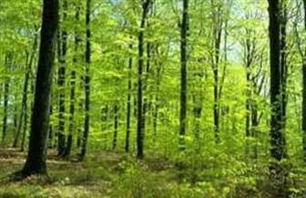 بواعث أخرى للكربون.. الغابات المدارية تكمل متاعب العالم