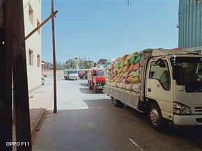 توريد 164 ألف طن قمح منذ بداية موسم التوريد بمحافظة كفرالشيخ وحتى الآن|صور