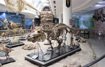 زيارة افتراضية للمتحف الحيواني بالجيزة