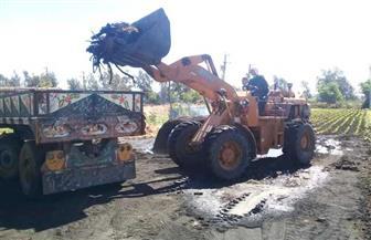 إزالة 995 حالة تعد على أملاك الدولة والأراضي الزراعية ومخالفات بناء في الغربية | صور
