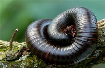 اكتشاف أقدم «حشرة» في العالم عمرها 425 مليون عام