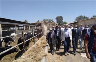 """""""القصير"""": رفع كفاءة مزارع الإنتاج الحيواني التابعة للوزارة وإدارتها بأسلوب اقتصادي  صور"""