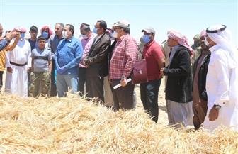 افتتاح موسم حصاد القمح والشعير بشمال سيناء  | صور