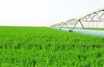 «الزراعة» تصدر نشرة بالتوصيات الفنية لمزارعي محصول الأعلاف الخضراء الشتوية والصيفية