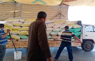 كفر الشيخ تسجل نصف الكمية المستهدف توريدها من القمح في 20 يوما | صور