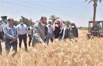 محافظ أسيوط: توريد 32 ألفا و559 طن قمح وحصاد 150 ألف فدان حتى الآن | صور