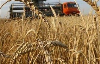 توريد 122 ألفا و906 أطنان من محصول القمح لشون وصوامع الغربية