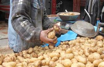 نقيب الفلاحين يكشف السر وراء انخفاض أسعار البطاطس