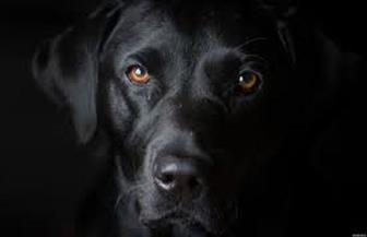 لماذا تعوي بعض الكلاب عند سماعها الأذان؟