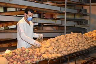 مبادرة لتقديم مواد غذائية للعمالة غير المنتظمة المتضررة من كورونا بالشرقية | صور