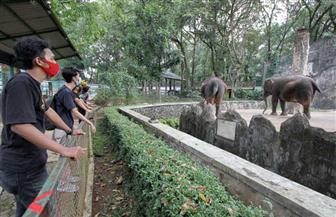 إندونيسيا تعيد فتح أقدم حديقة حيوان لديها مع قيود التباعد الاجتماعي