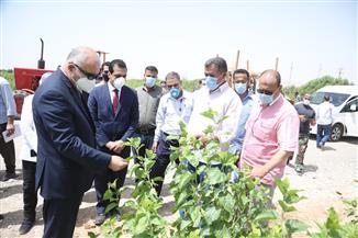 محافظ قنا: زراعة أشجار التوت بالظهير الصحراوي لإعادة صناعة الحرير بالصعيد   صور