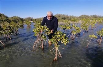 بدء تنفيذ خطة التوسع في زراعة غابات «المانجروف» بالبحر الأحمر | صور