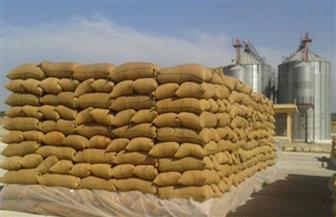 20 موقعًا لاستلام القمح في كفر الشيخ