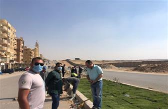 تشجير وزراعة الشوارع بالنجيل في هضبة الأهرام| صور
