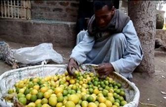 """""""كورونا يصيب الليمون بالجنون"""".. سعر الكيلو يصل إلى 50 جنيها.. وخبراء يكشفون السبب"""