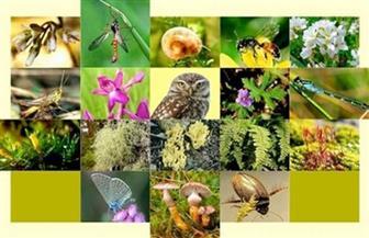 """انطلاق احتفالية الاتحاد النوعي للبيئة في أسوان بـ""""يوم البيئة العالمي"""" إلكترونيا"""