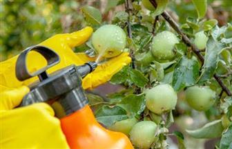 """""""نقيب الفلاحين"""" يكشف عن طرق الوقاية من متبقيات المبيدات علي الخضراوات والفواكه"""