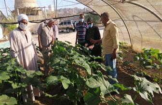 رئيسة مدينة سفاجا: قريبا طرح منتجات الصوب الزراعية وبيعها للمواطنين بأسعار مخفضة| صور