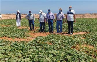 مدير «أكساد»: تنفيذ مشروعات زراعية في مطروح ودعم البحوث لمواجهة محدودية الموارد المائية