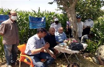 """""""البحوث الزراعية"""" تنفذ مدرسة حقلية إرشادية لمحصول الذرة الشامية بمحافظة كفر الشيخ"""