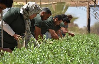 إنتاج 50 ألف شتلة زيتون بمركز التنمية المستدامة بمطروح دعما للمزارعين | صور