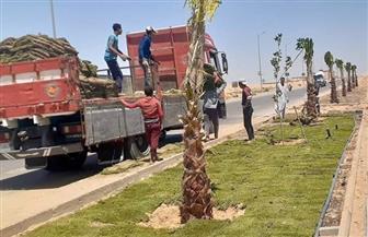 بدء تنفيذ مشروع رفع كفاءة وصيانة المسطحات الخضراء للمناطق السكنية بمساحة 93 فدانا بمدينة الشروق| صور