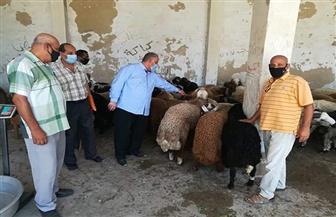 طرح خراف العيد بسعر 57 جنيها للكيلو القائم بمديرية الزراعة بالغردقة | صور
